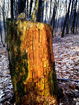 tree trunk,