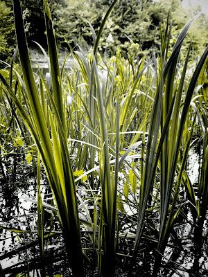 plants, pond