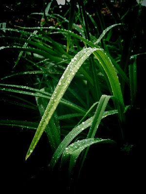 plants, rain