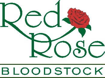 Red Rose Bloodstock