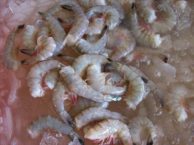 Beautiful, Fresh white shrimp tails.