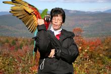"My Harlequin Macaw ""Terra"""
