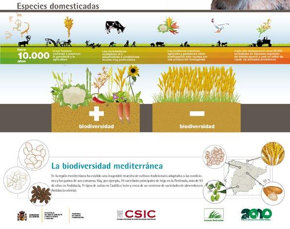 El Significado De Biodiversidad Yahoo