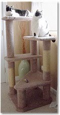 Jack &amp; Lilly&#39;s Cat Tree Plan