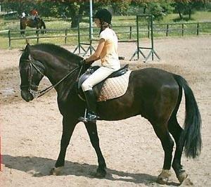 Caballos y equitaci n accesorios para montar a caballo for Accesorios para caballos
