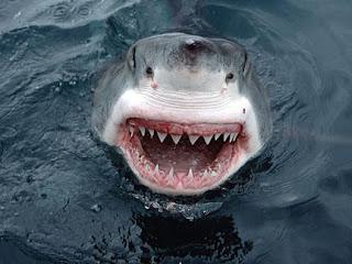 Le grand requin blanc, métaphore de Jacques Chirac