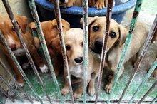 Spaanse honden in nood