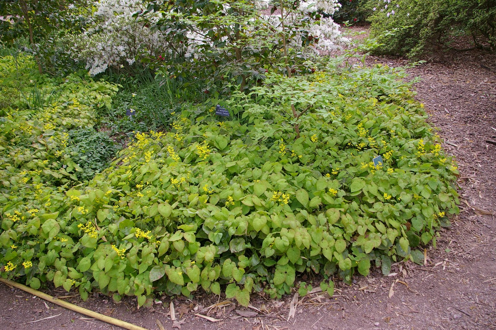 Seriously, groundcovers for shaded areas