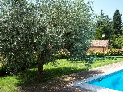 L 39 aiuola odorosa il concetto tutto aiuolino di pausa for Aiuola con olivo