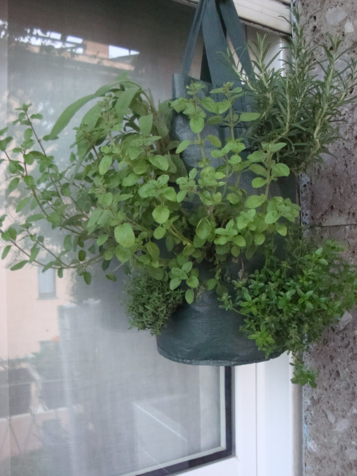 Tutti pazzi per le piante orto verticale orto sospeso - Cucina sul balcone ...