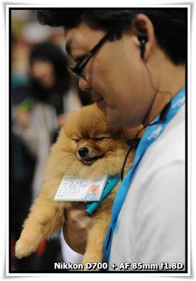 香港寵物節 Pet Show 2010