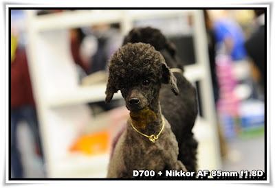 香港國際寵物用品展暨水族博覽+全犬種冠軍狗展