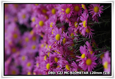 圓玄學院2009菊花展(Chrysanthemum Show 2009 at The Yuen Yuen Institute)@Carl Zeiss Jena MC BIOMETAR 120mm f2.8