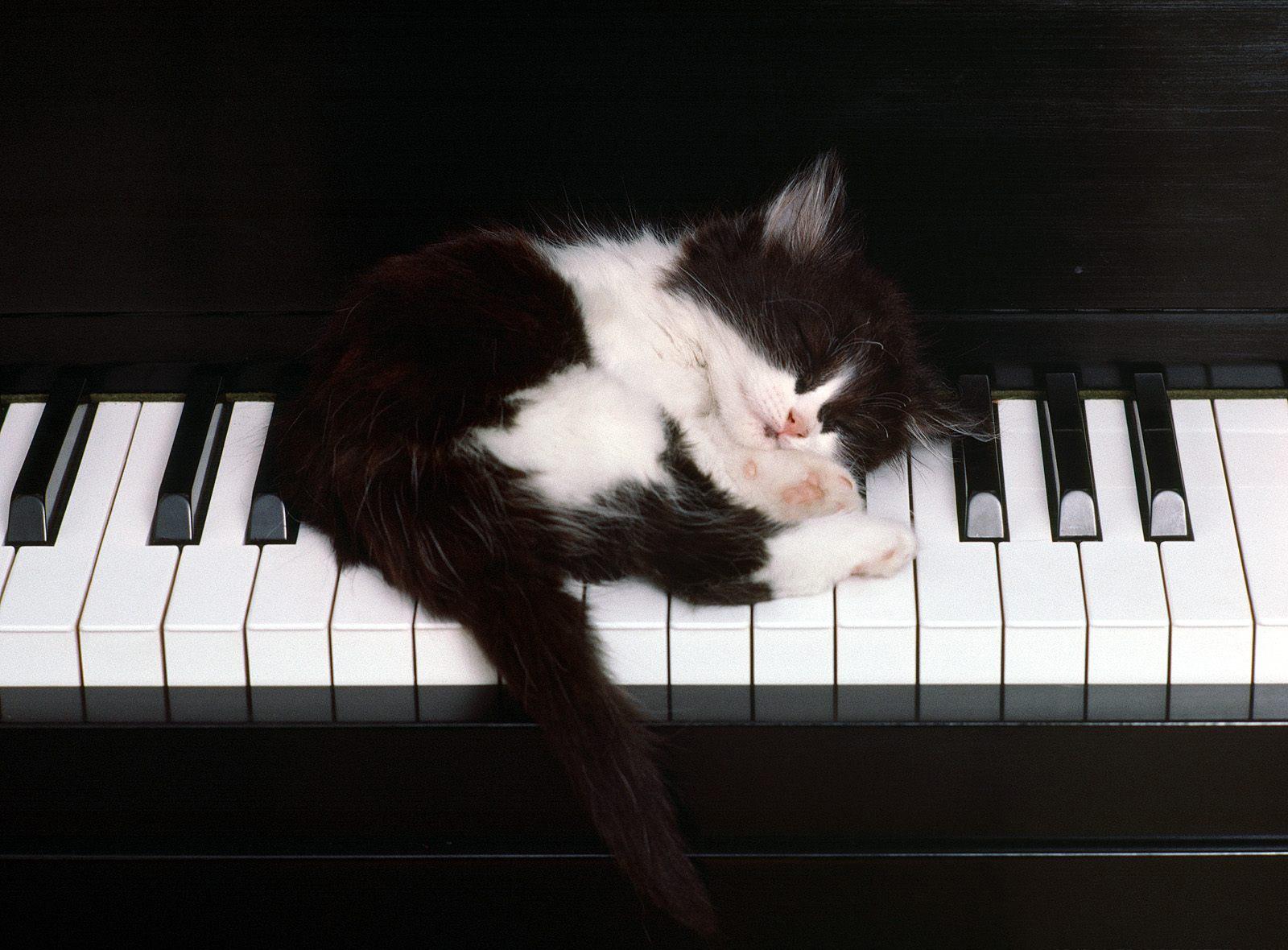 http://3.bp.blogspot.com/_sRGU_JXOz6E/TRHaZWylK1I/AAAAAAAAADA/7vF_uaI0Kew/s1600/black-white-cat-wallpaper-1600x1200%255B1%255D.jpg