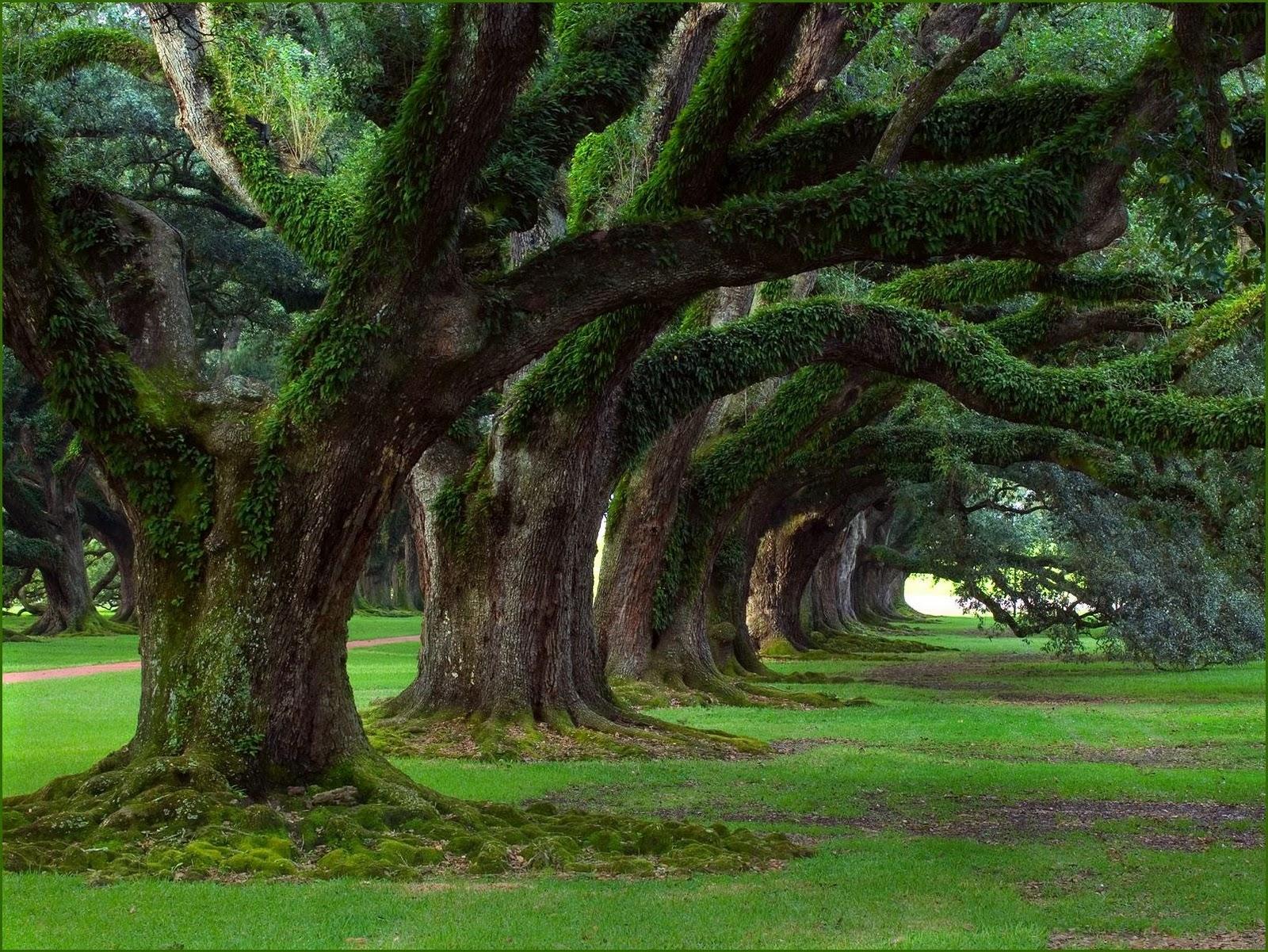 http://3.bp.blogspot.com/_sRGU_JXOz6E/TRTdmBsIXeI/AAAAAAAAATw/ElNax5_xJXk/s1600/Wallpaper-Nature-Trees.jpg