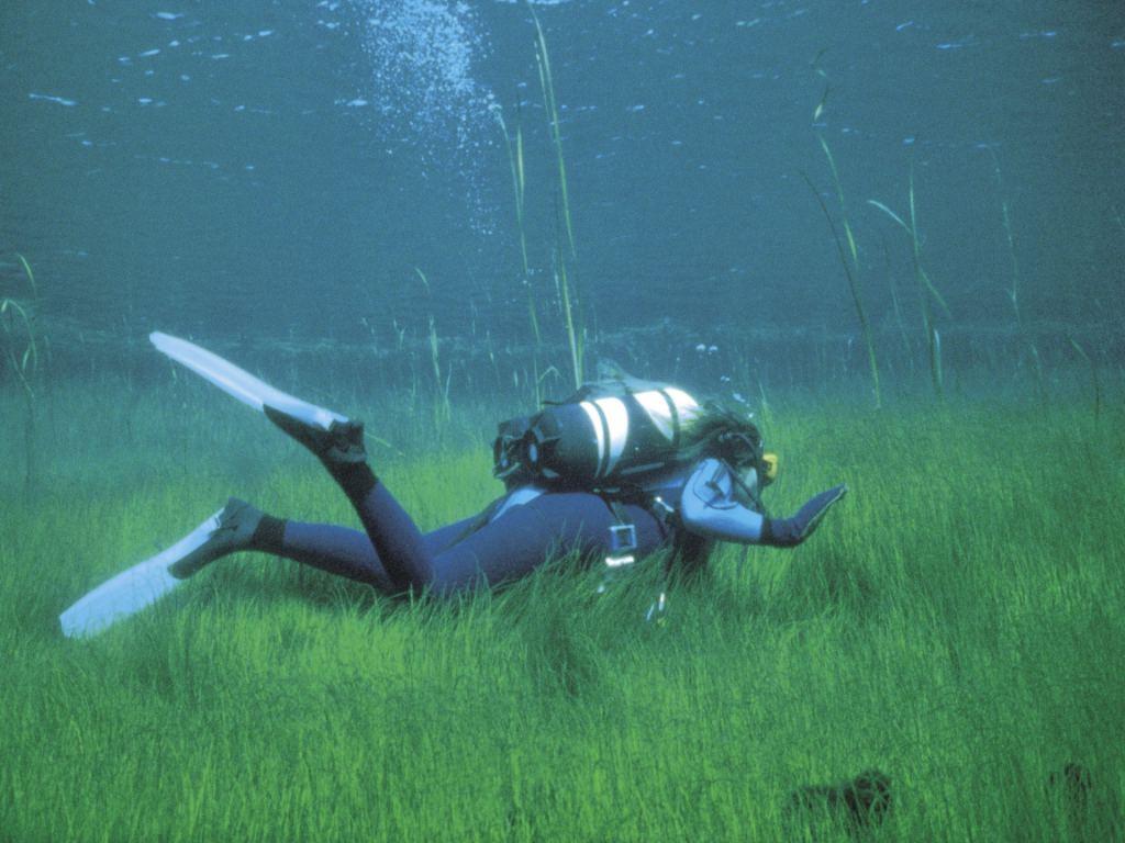 http://3.bp.blogspot.com/_sRGU_JXOz6E/TRX3IDgaZoI/AAAAAAAAAeI/VOLXwPr9skg/s1600/diving-horiz-1024.jpg