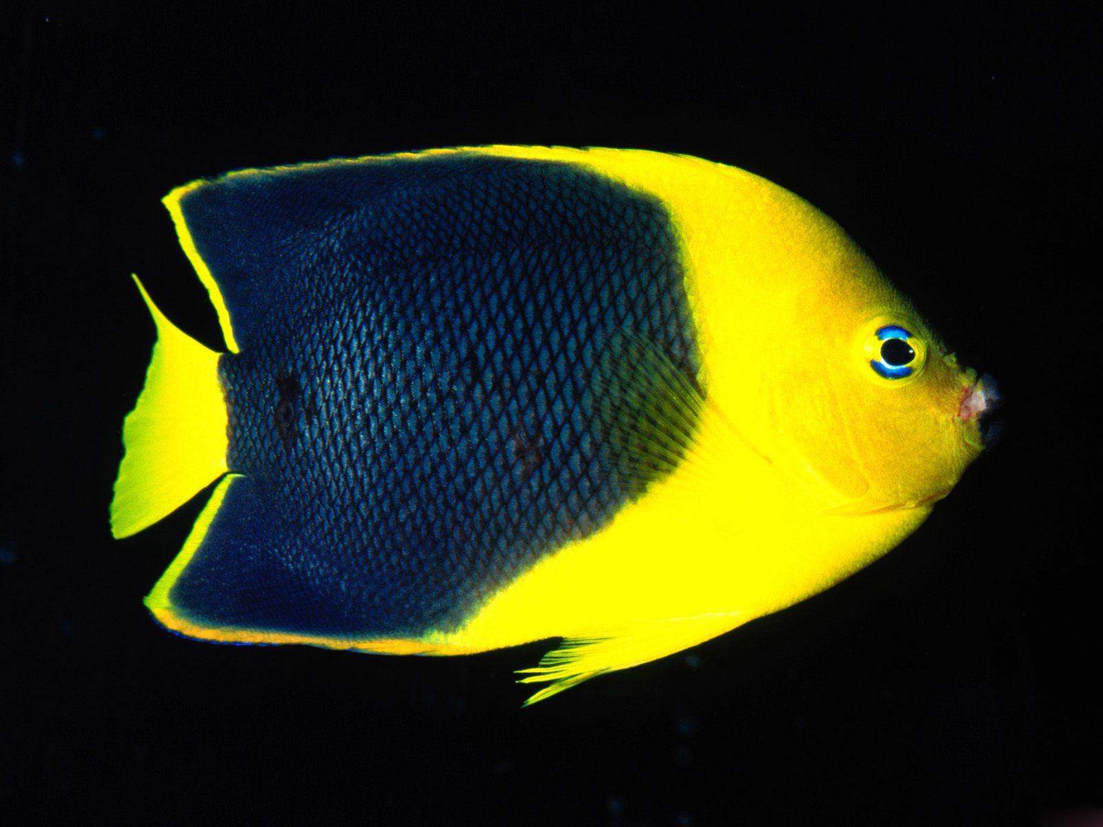 http://3.bp.blogspot.com/_sRGU_JXOz6E/TRXWMLPcsbI/AAAAAAAAAaw/pTqH0hzgZ6o/s1600/Underwater+Wallpaper+%25282%2529.jpg