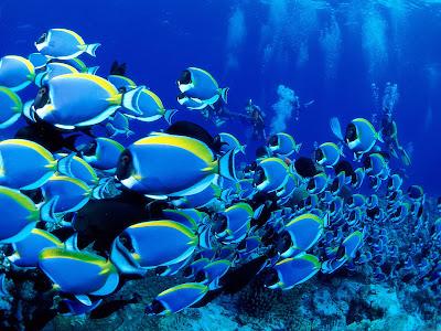 Underwater Fish Wallpaper HD
