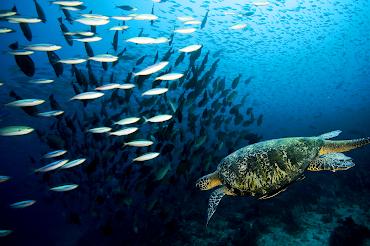 #2 Turtle Wallpaper