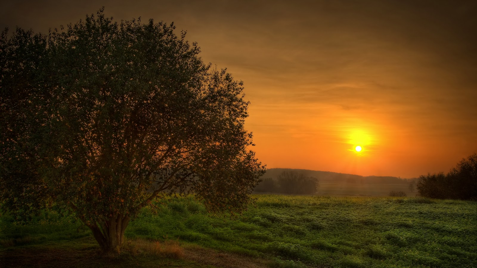 Nature Tree And Sunset Wallpaper
