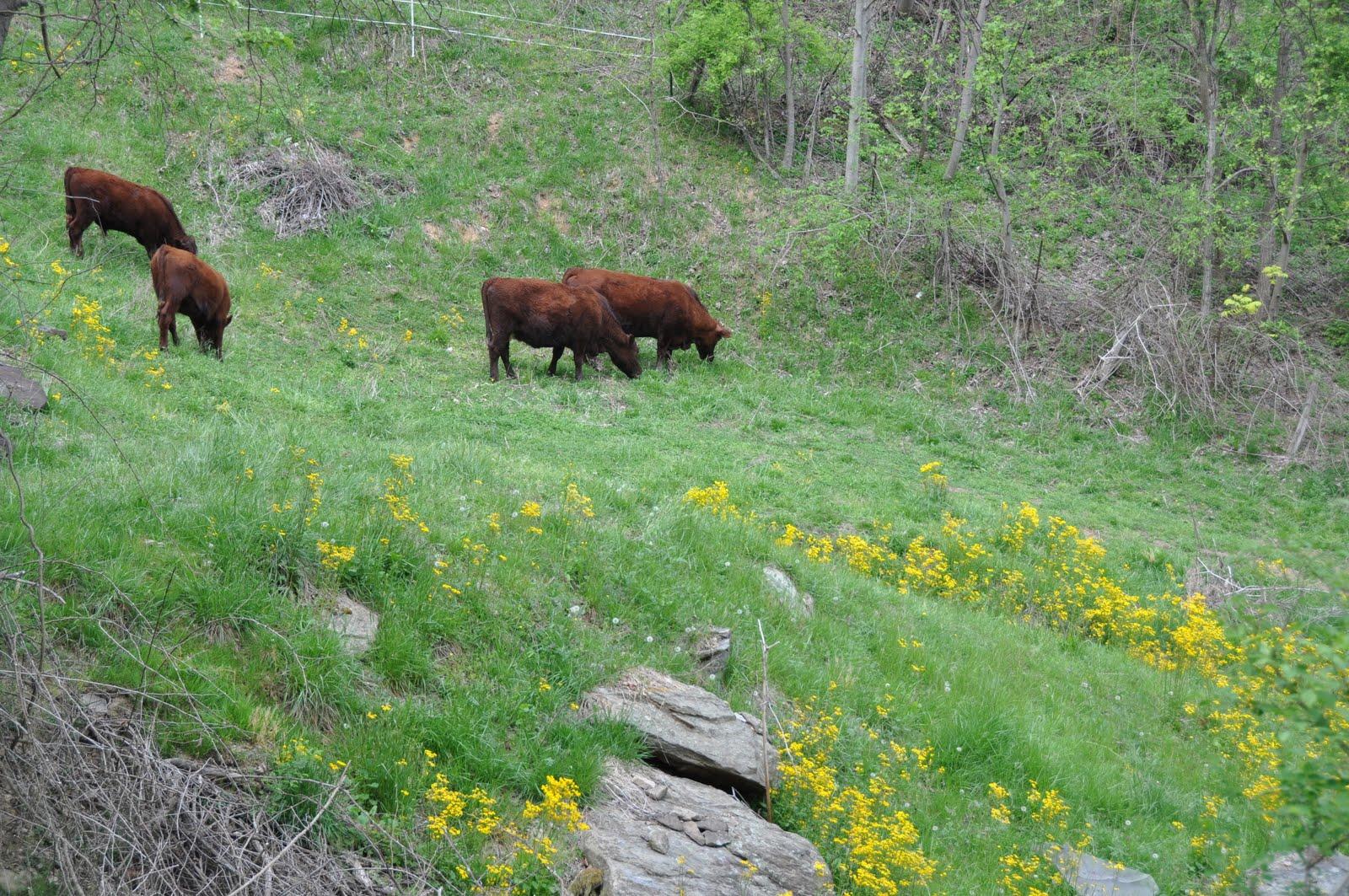Wild Horse Montagne Barbecue