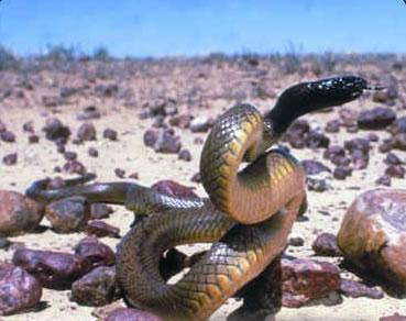 las 10 especies mas venenosas del mundo