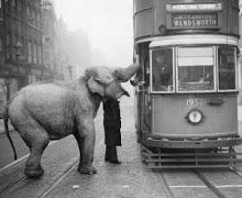 londoni elefánt