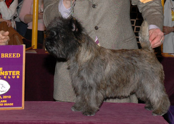 DOG SHOW POOP: 2010-