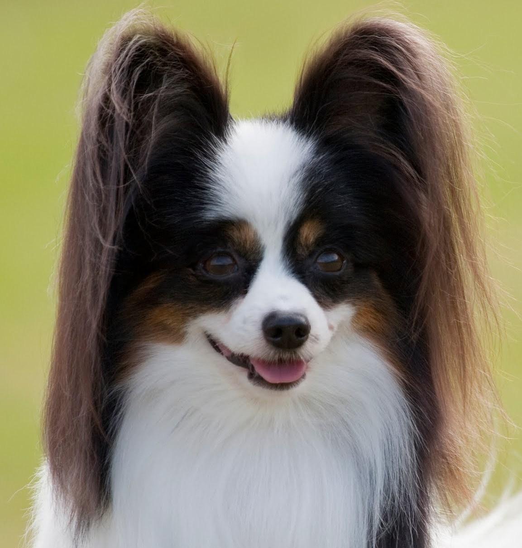 Topeka Ks Dog Show