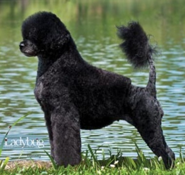 Lady Luck Dog Grooming