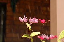 Orquídeas...
