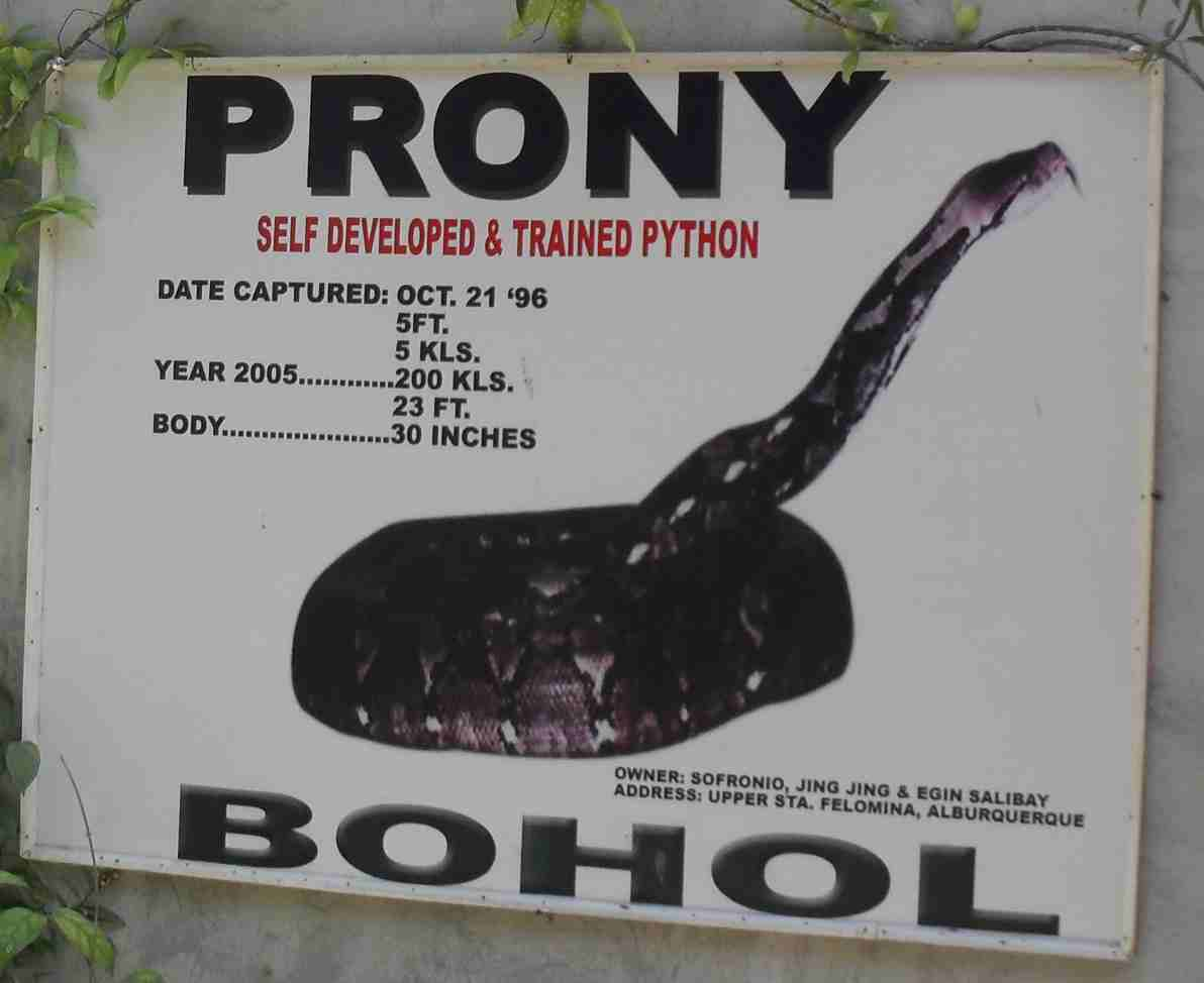 Pinoy Roadtrip Prony The Biggest Python In Captivity