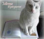 Mirmo: El gato gourmet