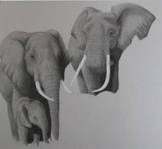 African elephants charcoal drawing in progress