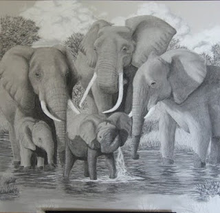 African elephant family charcoal drawing in progress