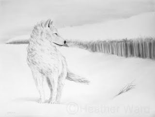 Alaskan tundra wolf charcoal drawing