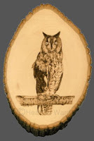long-eared owl pyrography drawing