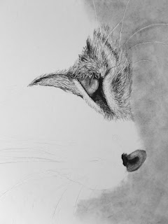 bobcat drawing in progress