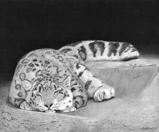 snow leopard charcoal and graphite pencil drawing