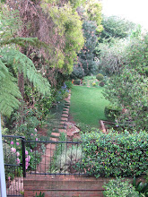 Cath&#39;s townhouse garden