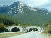 Several of these were under construction between. Jasper and Banff. (banff animal crossing~ )