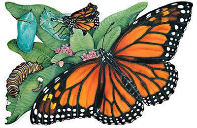 Butterflies Tattoos, Butterflies Design, Best Butterflies, Butterflies Tattoos, Butterfly Pictures, Butterflies Galleries, Free Butterfly Image, Personal Best Butterfly