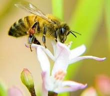 με αγαπη στην μελισσα
