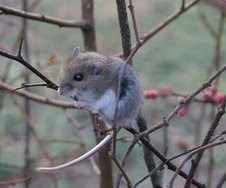 One frightened fieldmouse
