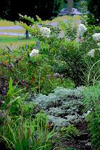 summer garden 09