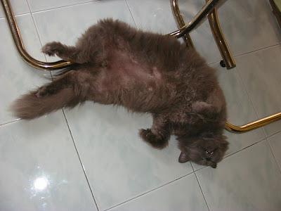 Sungguh tak sopan Datuk K tidur terkangkang.