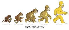 Evolución. Homero J. Simpsons
