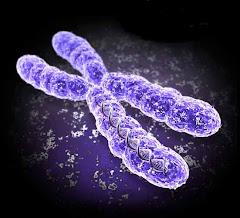 Modelo de cromosoma