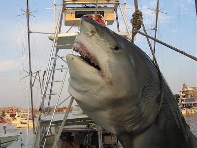 Kumpulan Foto Ikan Raksasa Yang Pernah Di Tangkap - Hax