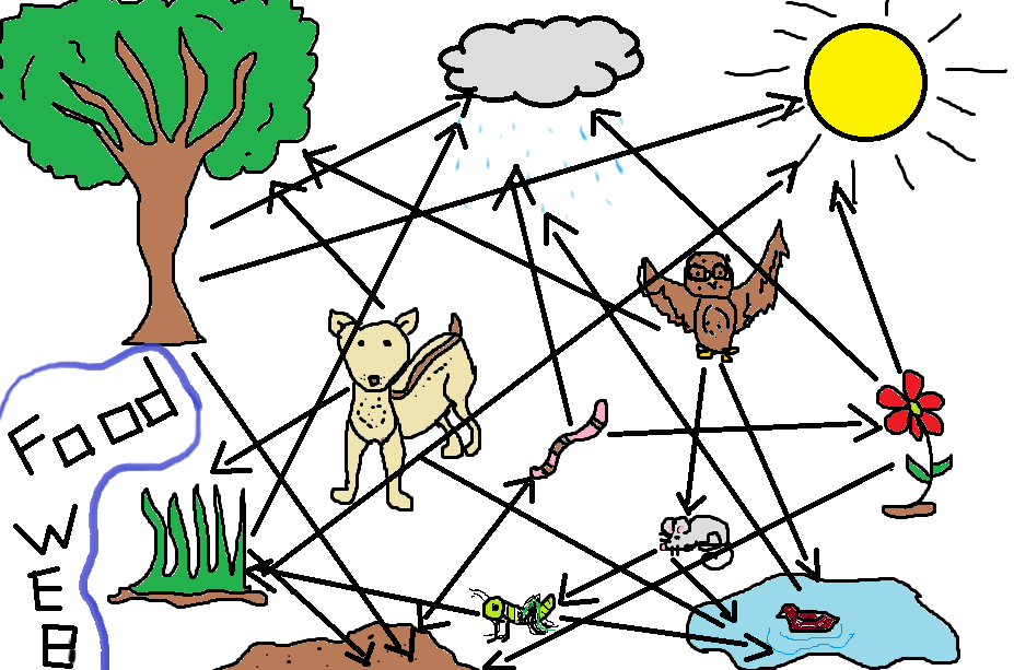 desert food chain diagram. picture of food chain and food